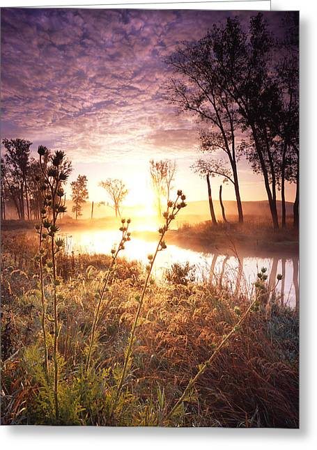 Glowing Grasses Greeting Card by Ray Mathis