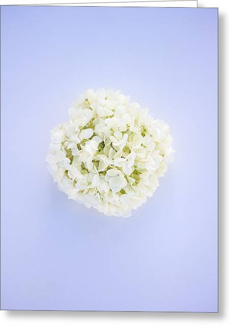 Glowing Hydrangea Greeting Card by Parker Cunningham