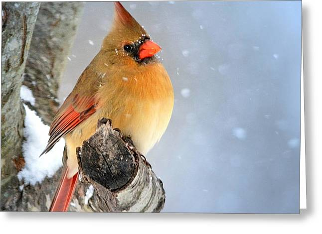 Glowing In The Snow Greeting Card by Nava Thompson