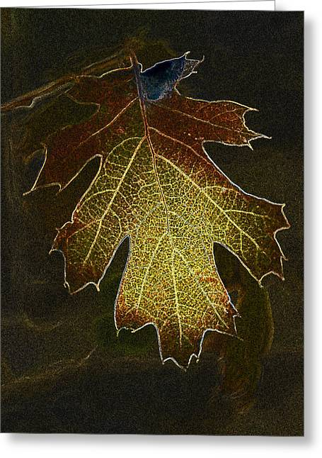 Greeting Card featuring the photograph Glowing Leaf by Judi Baker