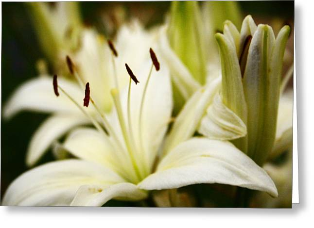 Glowing Lillies Greeting Card by Alexandra  Rampolla