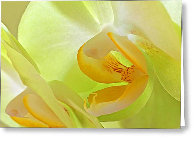 Glowing Orchid - Lemon And Lime Greeting Card by Gill Billington