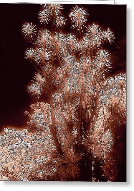 Glowing Palm Greeting Card by John Cardamone