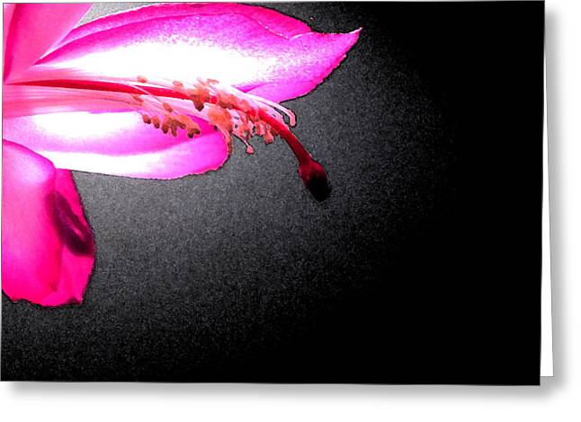 Glowing Pink Greeting Card by Mary Bedy