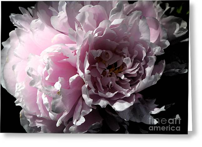 Glowing Pink Peony Greeting Card by Christiane Schulze Art And Photography