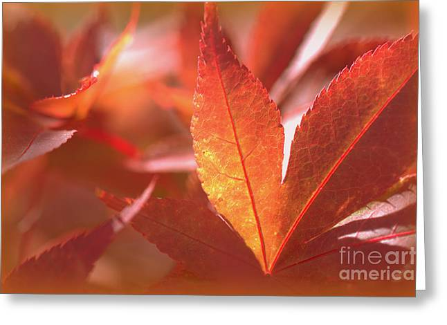 Glowing Red Leaves Greeting Card