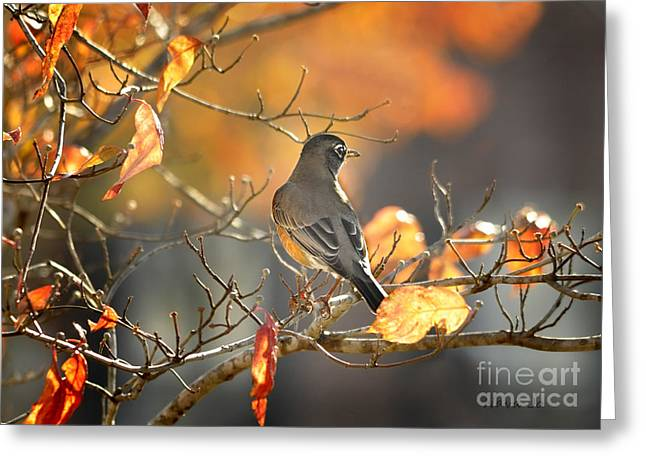Glowing Robin 2 Greeting Card by Nava Thompson