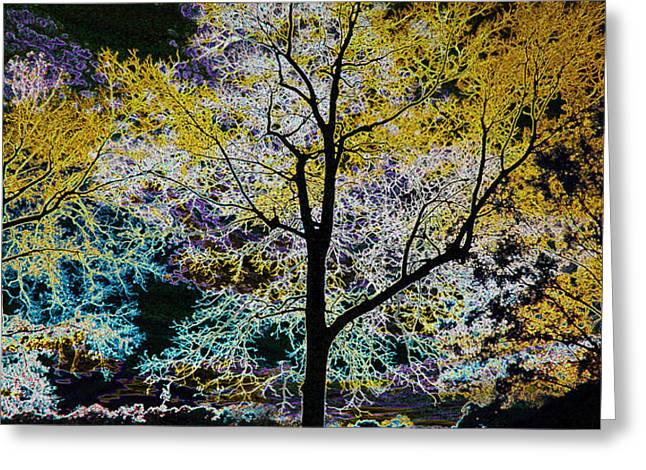 Glowing Trees Greeting Card