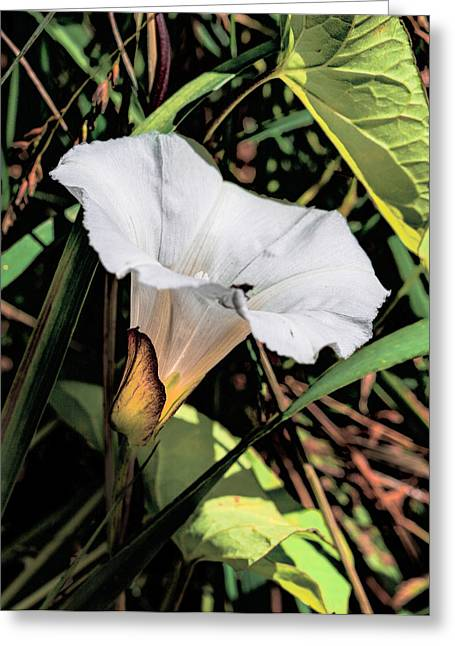 Greeting Card featuring the photograph Glowing White Flower by Leif Sohlman