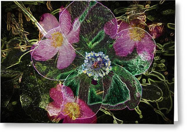 Glowing Wild Rose Greeting Card by Penny Lisowski