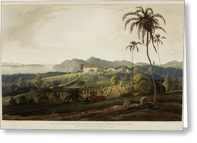 Glugor House And Spice Plantations Greeting Card by British Library