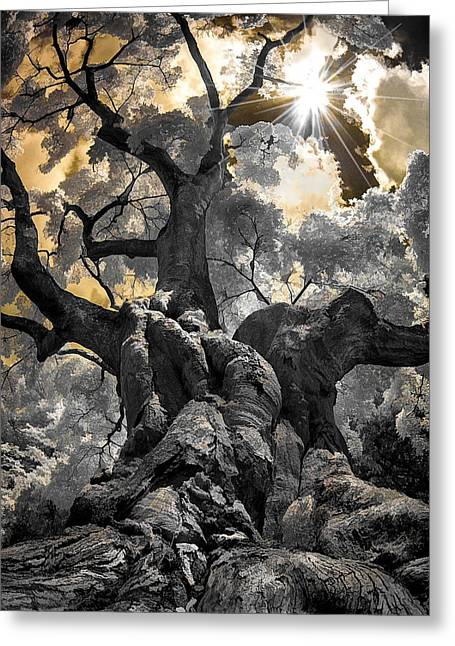 Gnarled Maple Greeting Card
