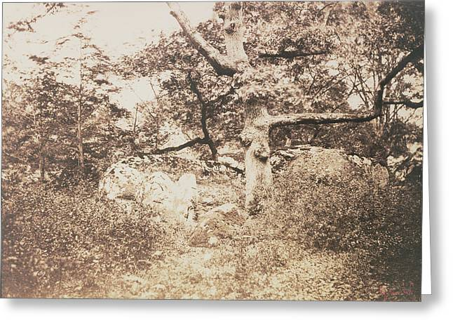 Gnarled Oak Tree Near Lepine Crossroads Gustave Le Gray Greeting Card by Litz Collection