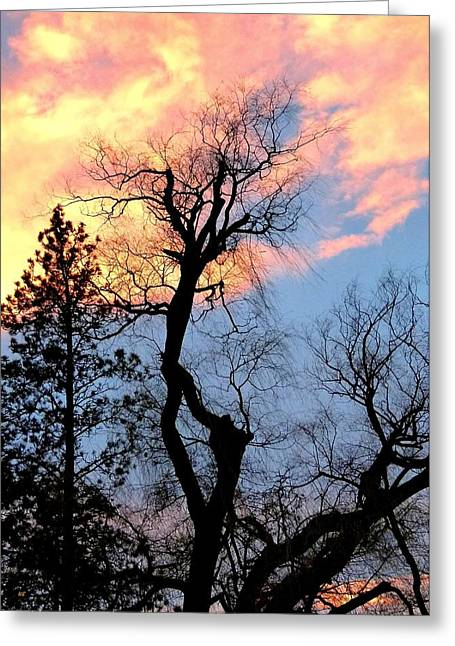 Gnarled Tree Silhouette Greeting Card by Will Borden