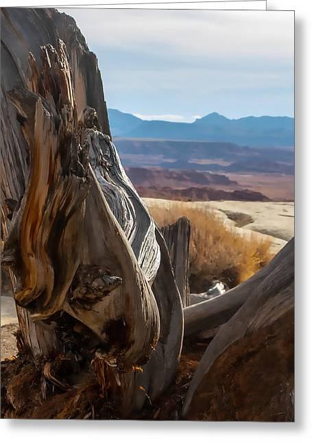 Gnarly Desert Cypress In Utah Greeting Card by Michael Flood