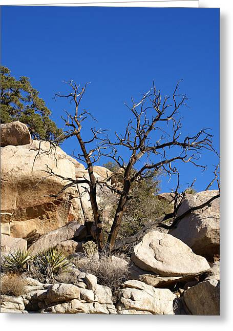 Gnarly Joshua Tree Greeting Card by Barbara Snyder