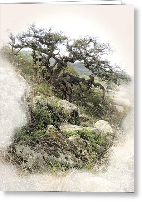 Gnarly Oak Tree Greeting Card by Robert Ball