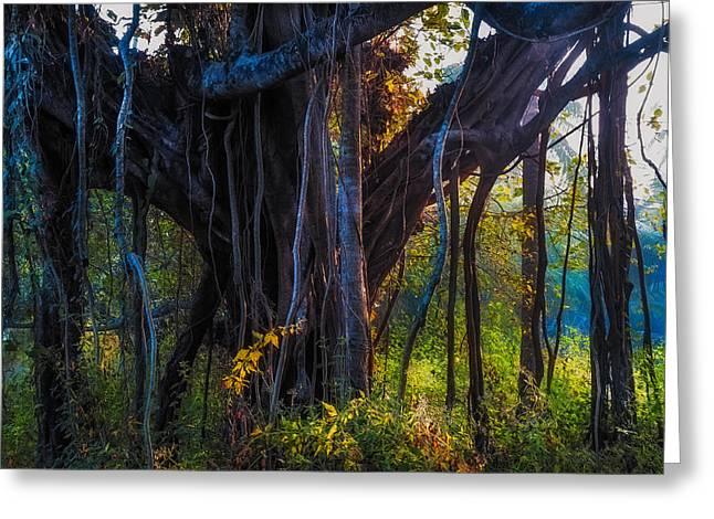 Goan Banyan Tree. India Greeting Card by Jenny Rainbow