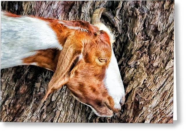 Greeting Card featuring the photograph Goat 3 by Dawn Eshelman