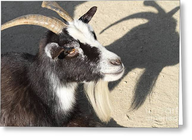 Goat 7d27402 Greeting Card