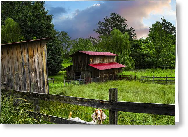 Goat Farm Greeting Card by Debra and Dave Vanderlaan