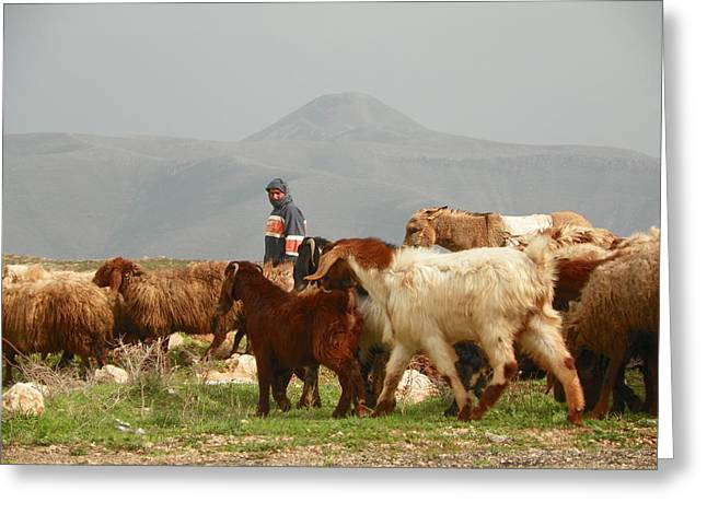 Goat Herder In Jordan Valley Greeting Card by Noreen HaCohen