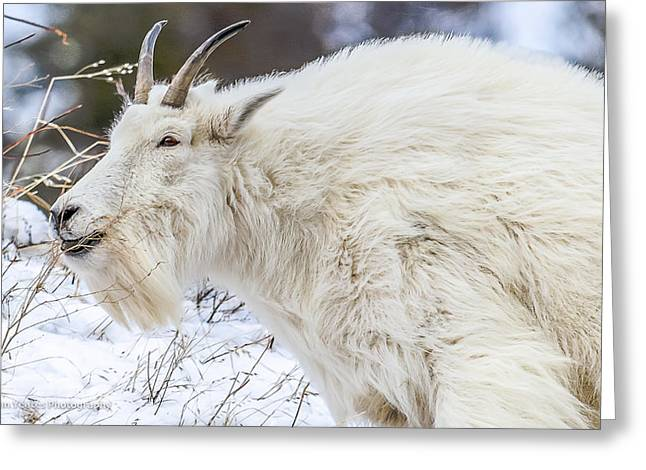 Greeting Card featuring the photograph Goat On The Mountain by Yeates Photography