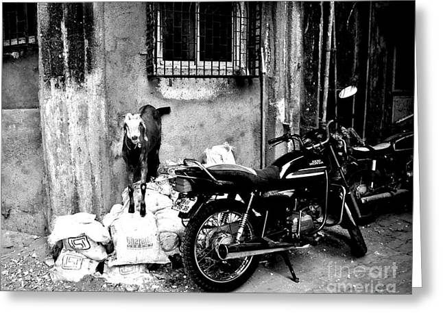 Goatercycle Black And White Greeting Card