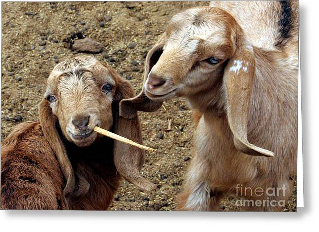 Goats #2 Greeting Card