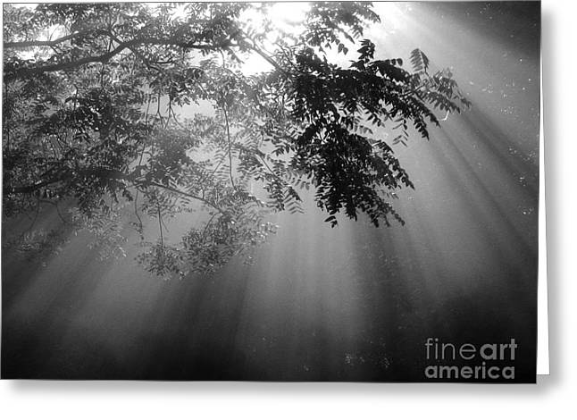 God Rays Greeting Card by Douglas Stucky
