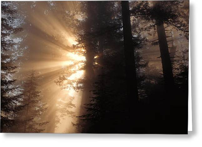 God Rays, Redwoods National Park, Ca Greeting Card by Panoramic Images