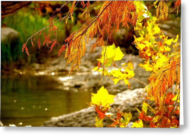 Greeting Card featuring the photograph God's Amazing Colors by David  Norman