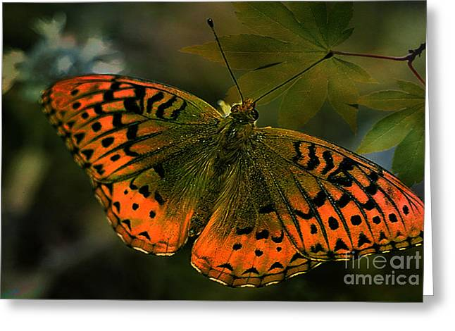 Gods Beauty Greeting Card by Beverly Guilliams