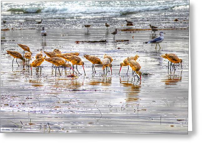 Godwits At San Elijo Beach Greeting Card