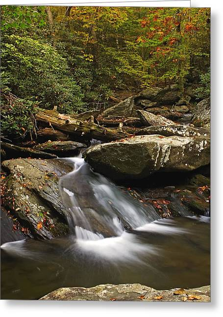 Goforth In The Fall Greeting Card
