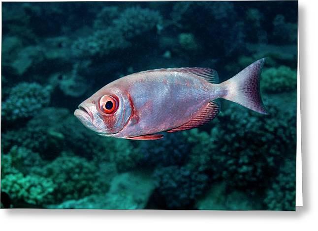 Goggle Eye On A Reef Greeting Card by Georgette Douwma