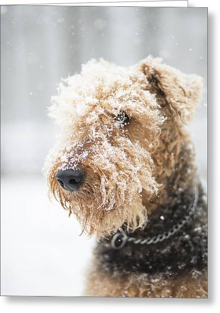 Dog's Portrait Under The Snow Greeting Card