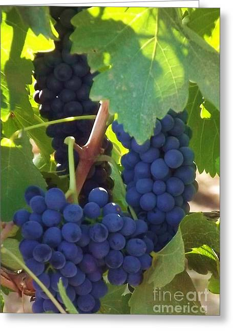 Golan Grapes Greeting Card by Diane Miller
