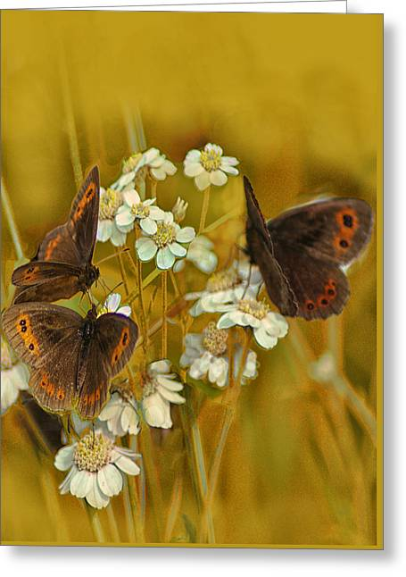 Gold And Brown Greeting Card by Jacqi Elmslie