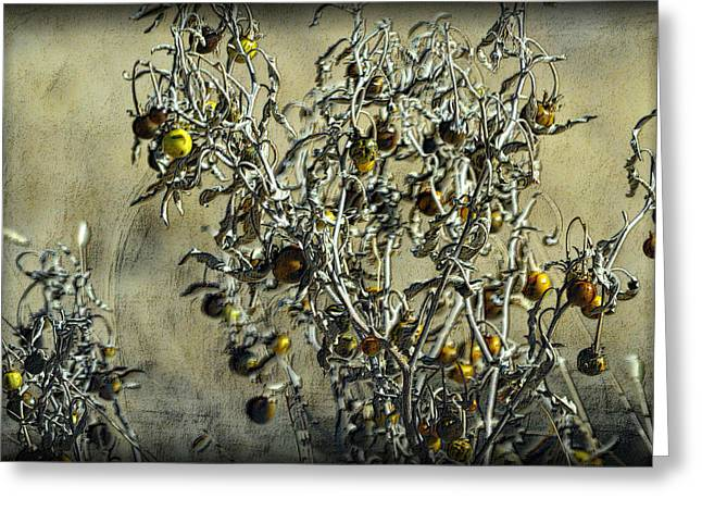 Greeting Card featuring the photograph Gold And Gray - Silver Nightshade by Nadalyn Larsen