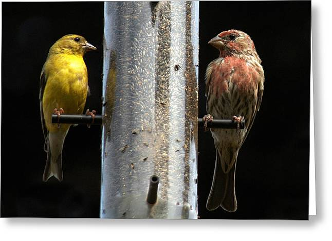Greeting Card featuring the photograph Gold And Purple Finch by Geraldine Alexander