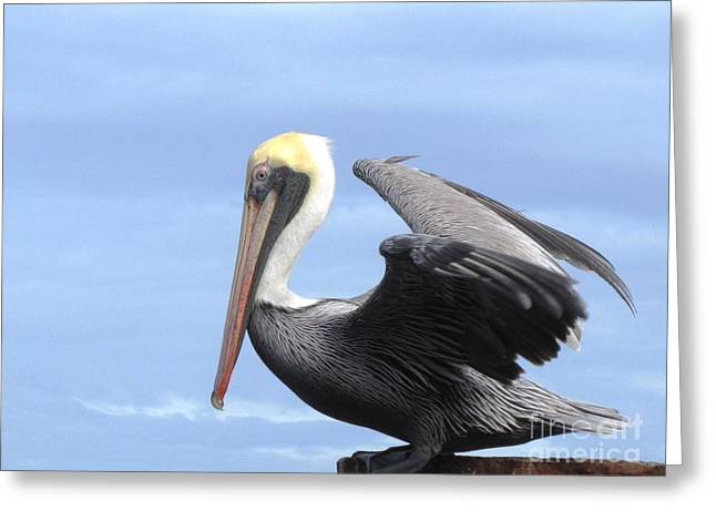 Gold Crown Pelican Greeting Card