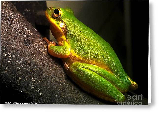 Gold Flake Frog Greeting Card by Marty Gayler