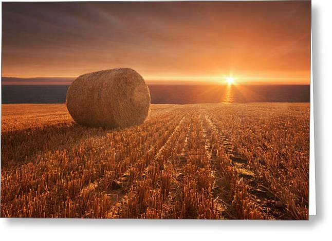 Gold Harvest Greeting Card