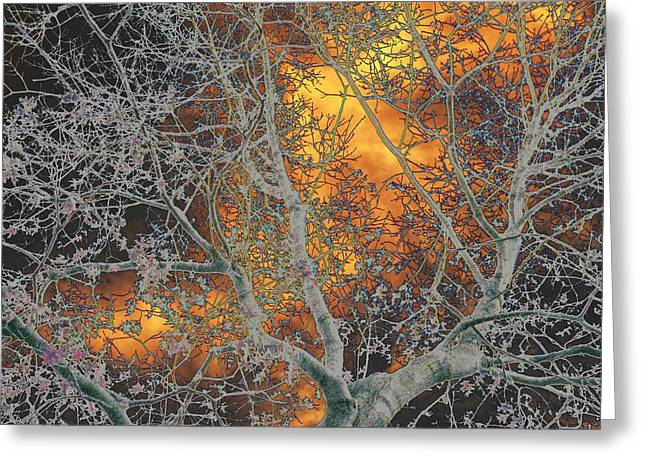 Gold In The Midst Of Winter Greeting Card