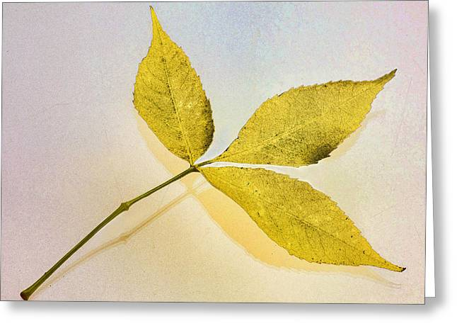 Gold Leaf Greeting Card