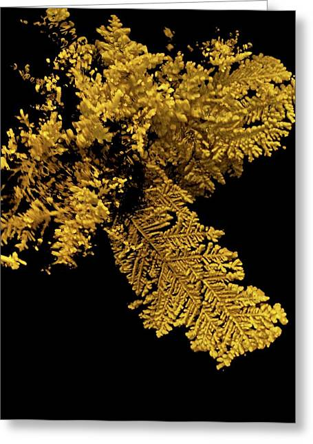 Gold Greeting Card by Natural History Museum, London