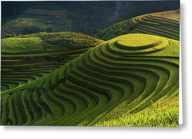 Gold Rice Terrace In Mu Cang Chai,vietnam. Greeting Card