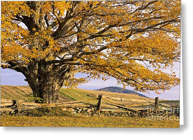 Golden Autumn Greeting Card by Alan L Graham