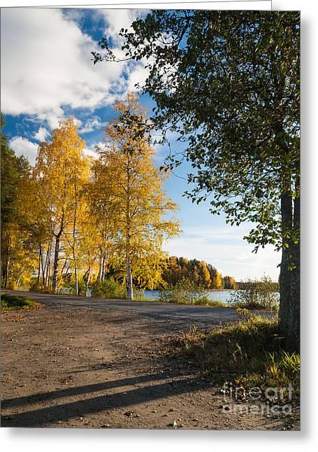 Golden Autumn Birches Greeting Card